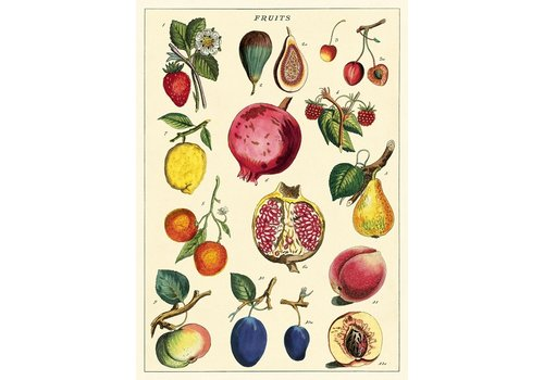 Cavallini Papers & Co Cavallini - Fruit 2 - Wrap/Poster