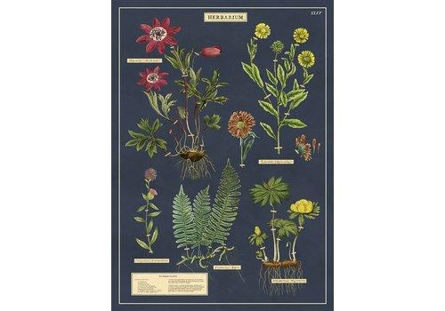 Cavallini Papers & Co Cavallini - Herbarium - Wrap/Poster