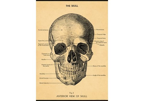 Cavallini Papers & Co Cavallini - The Skull - Wrap/Poster