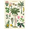 Cavallini Papers & Co Cavallini - Tropical Plants  - Wrap/Poster