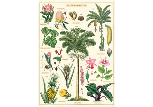 Cavallini Papers & Co Cavallini - Tropical Plants  - Wrap/Poster