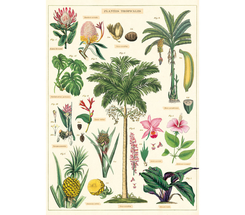 Cavallini - Tropical Plants  - Wrap/Poster