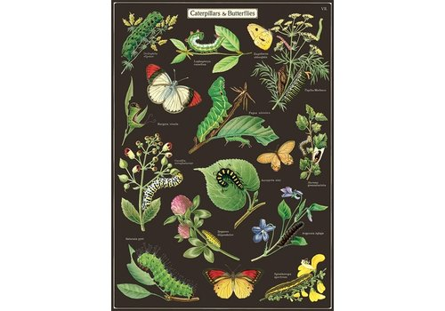 Cavallini Papers & Co Cavallini - Caterpillars & Butterflies - Wrap/Poster
