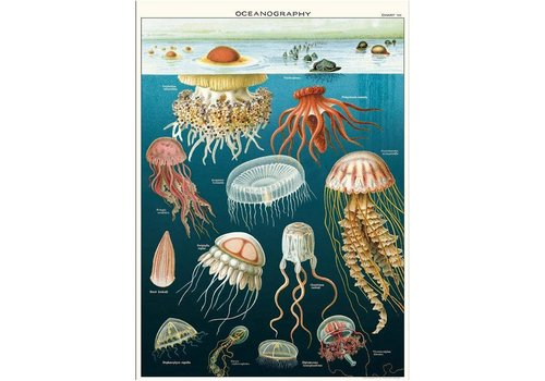Cavallini Papers & Co Cavallini - Jellyfish - Wrap/Poster