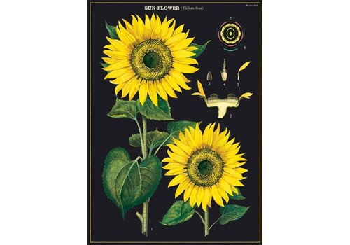 Cavallini Papers & Co Cavallini - Sunflower - Wrap/Poster