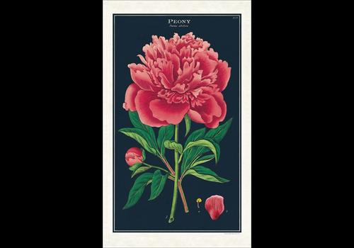 Cavallini Papers & Co Cavallini - Botanica Peony - Tea Towel