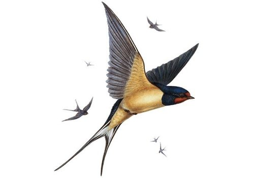 Archivist Gallery Archivist Gallery - Swallows - Greeting Card