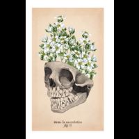 El Tarot de Anatomía y Botánica Antiguas - Claire Goodchild