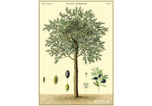 Cavallini Papers & Co Cavallini - Olive Tree - Wrap/Poster