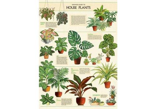Cavallini Papers & Co Cavallini - House Plants  - Wrap/Poster