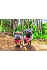Big and Little Dogs Big and & Little Dogs Hoody Harness Pink