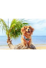 Big and Little Dogs Big and & Little Dogs Adjustable Tropical Paradise