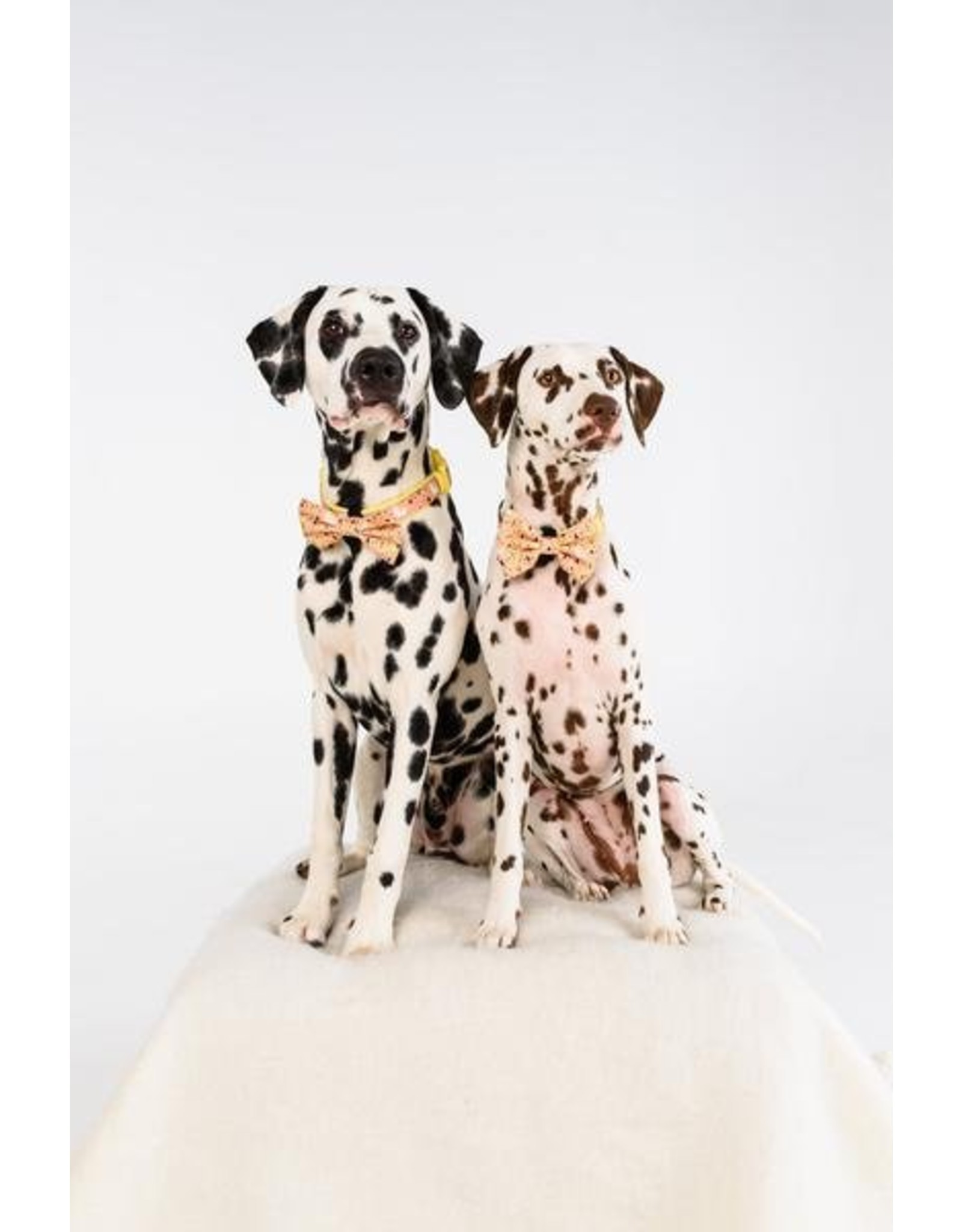Big and Little Dogs Big and & Little Dogs halsband Mexicali