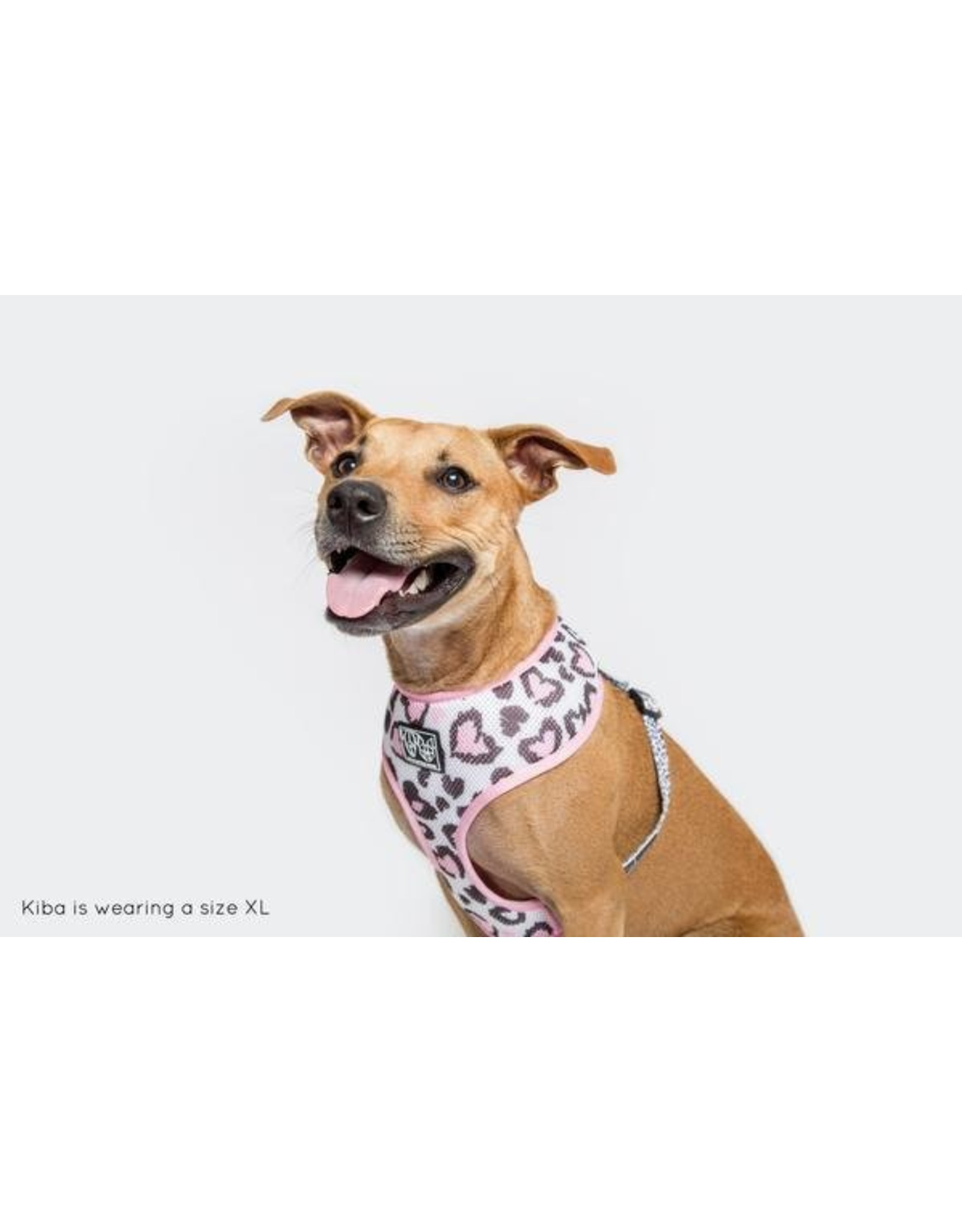 Big and Little Dogs Big and Little Dogs Classic Harness Wild Love