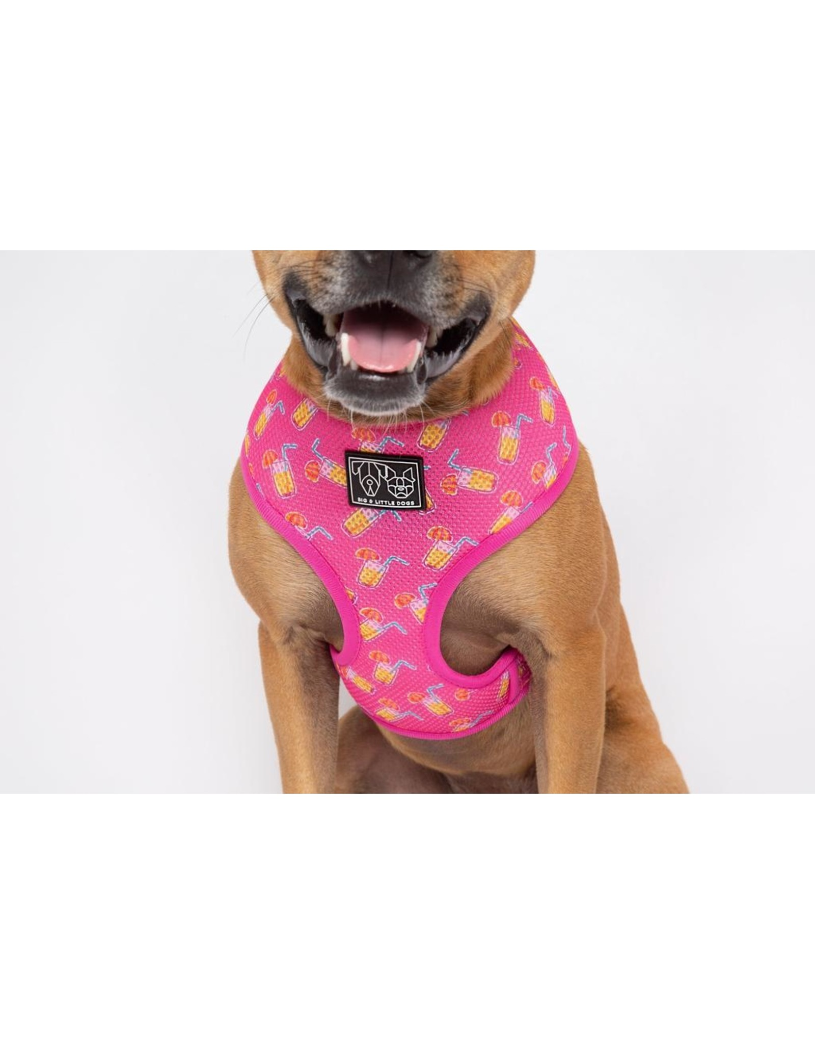 Big and Little Dogs Big & Little Dogs Classic Harness Pawty Punch