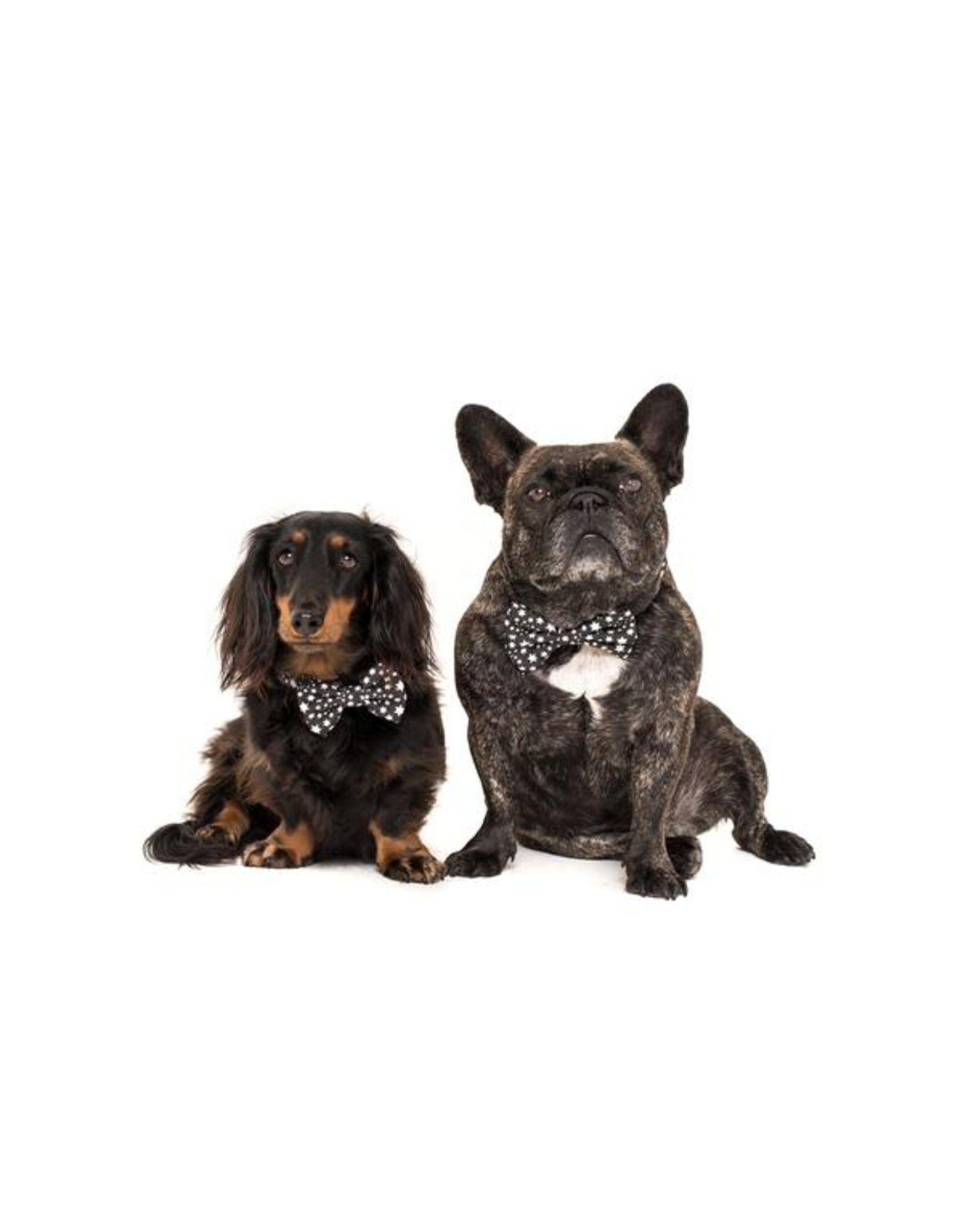 Big and Little Dogs Big and Little Dogs Halsband Shoot For The Stars