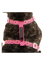 Big and Little Dogs Big and Little Dogs Strap Harness Having a Ball