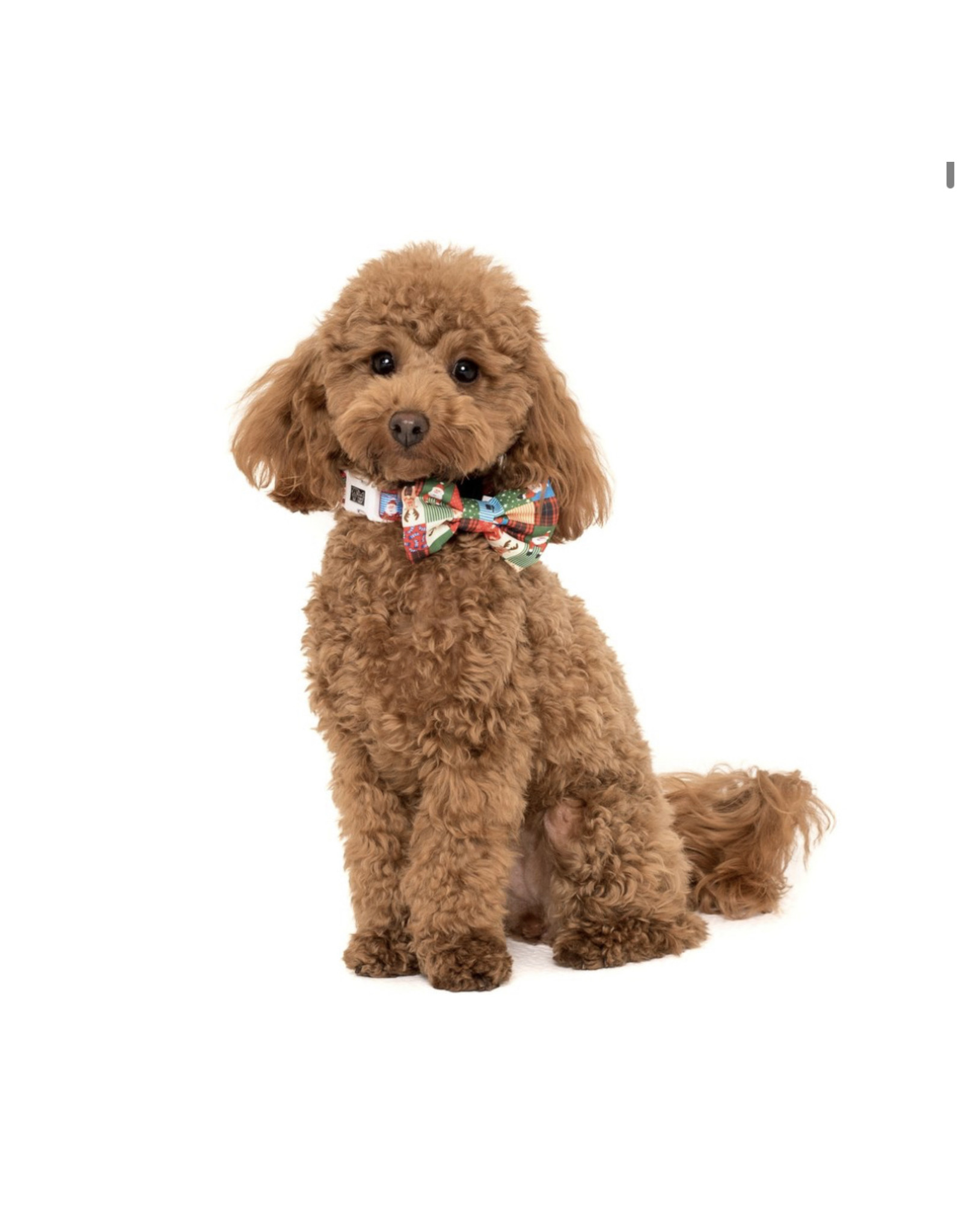 Big and Little Dogs Big and Little Dogs Halsband Silly Season