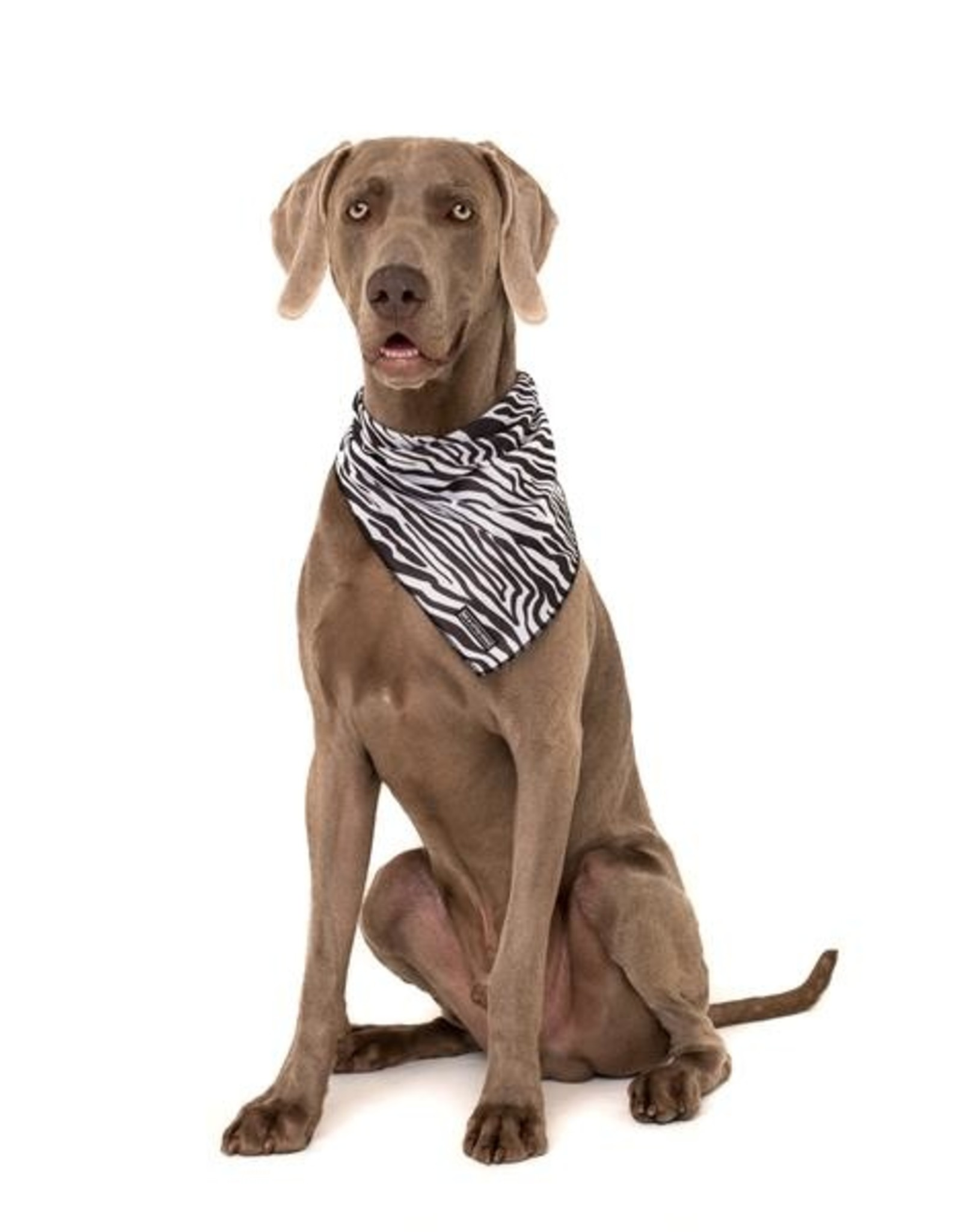 Big and Little Dogs Big  and Little dogs Bandana Into The Wild (ALLEEN M/L)