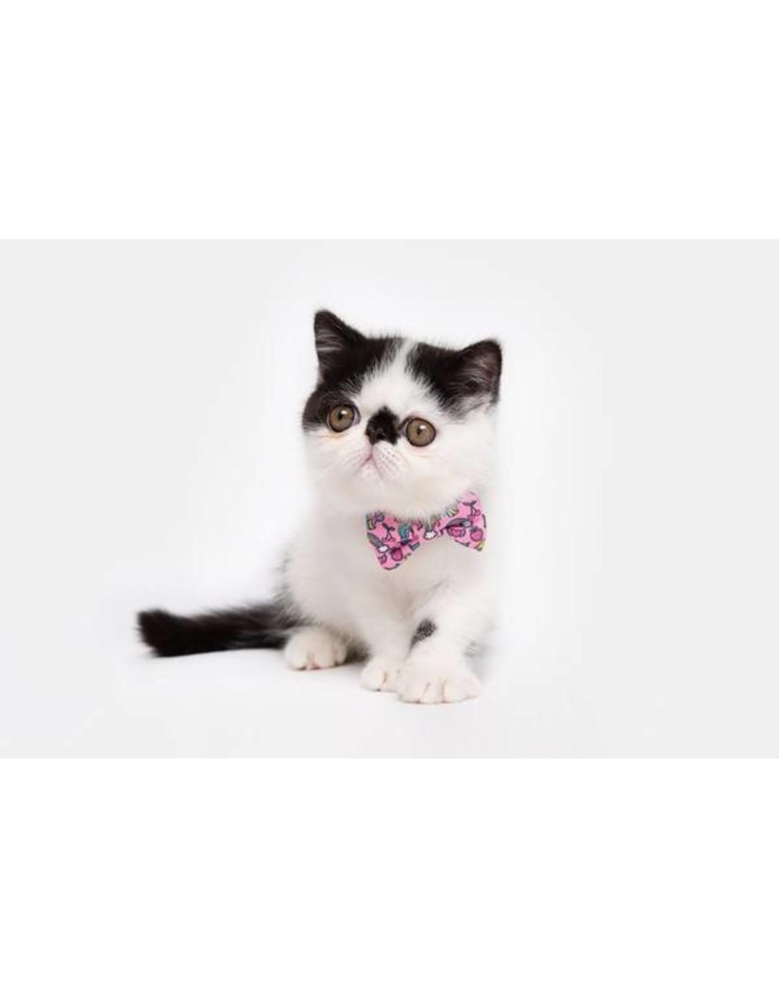 Little Kitty Little Kitty Cat Collar & Bow Tie Meow-Gical
