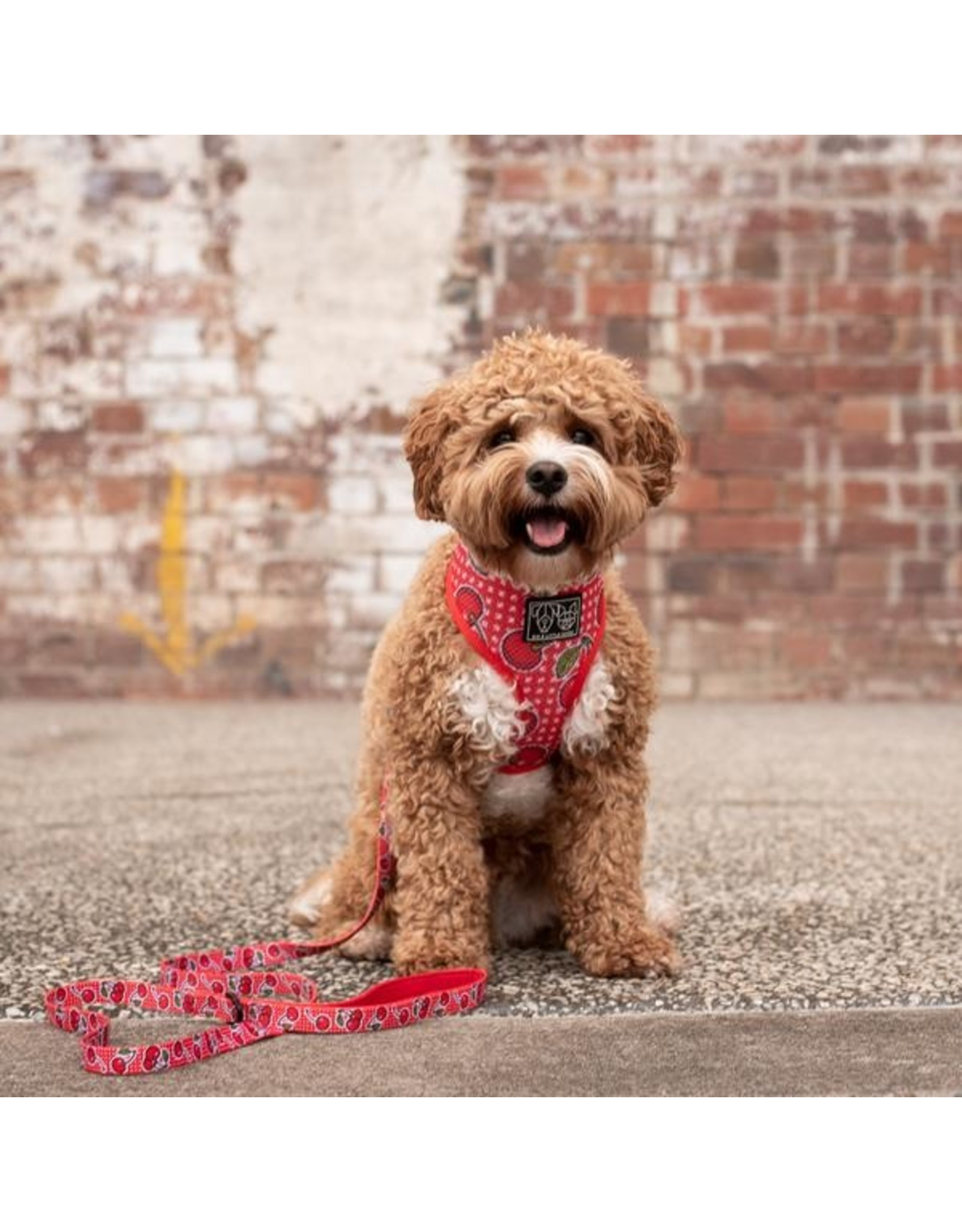 Big and Little Dogs Big & Little Dogs Classic Harness Cherrylicious
