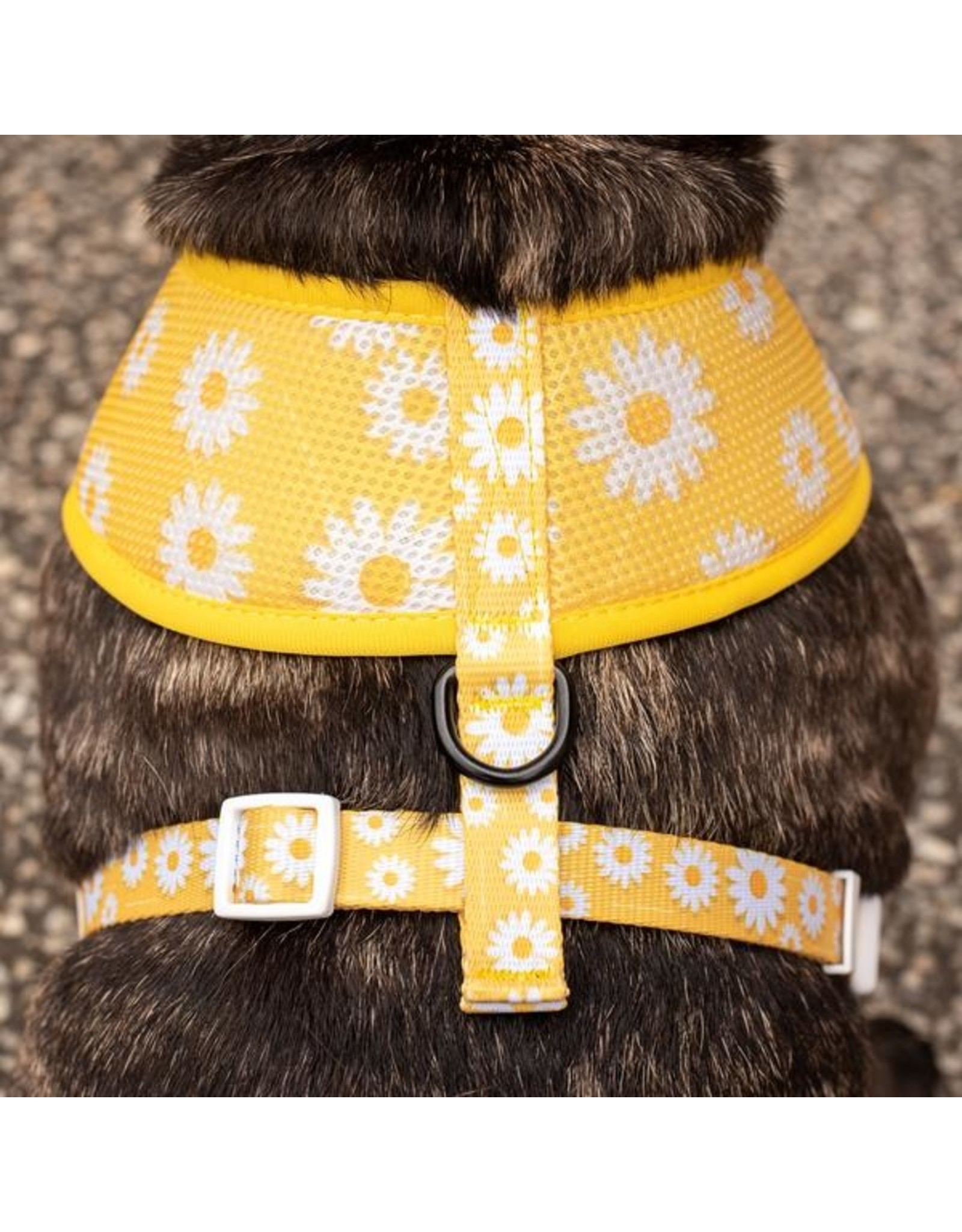 Big and Little Dogs Big & Little Dogs Classic Harness Oopsie Daisy
