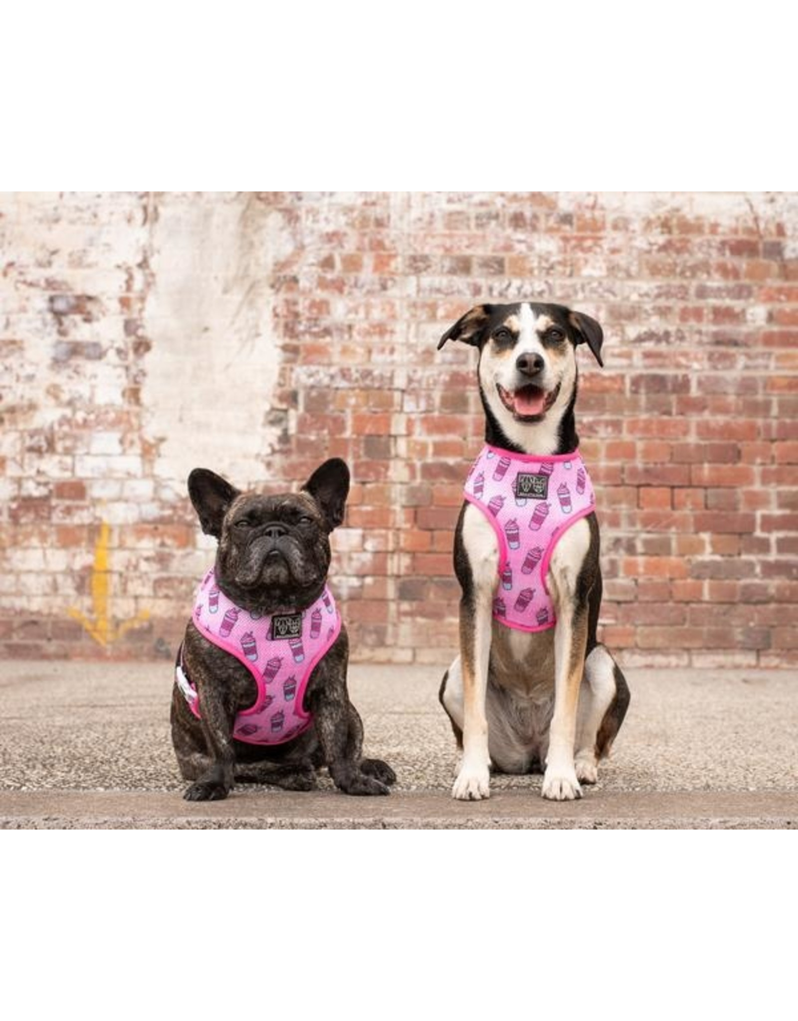 Big and Little Dogs Big & Little Dogs Classic Harness Slushies