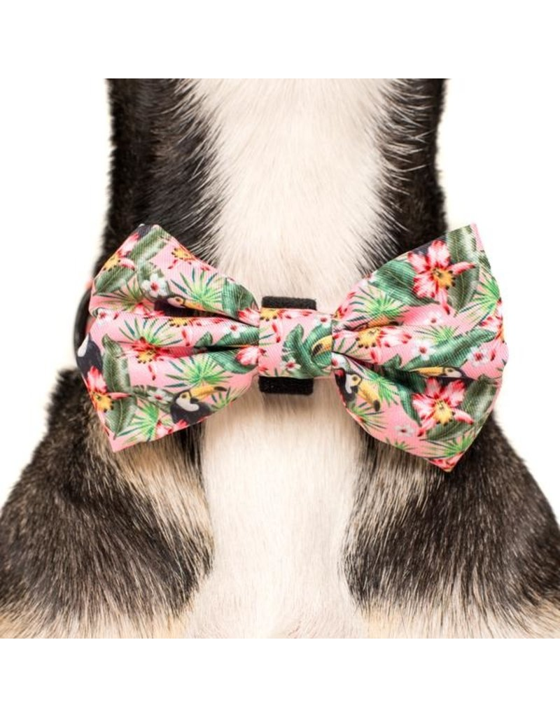 Big and Little Dogs Big and Little Dogs Halsband Troppo Toucan