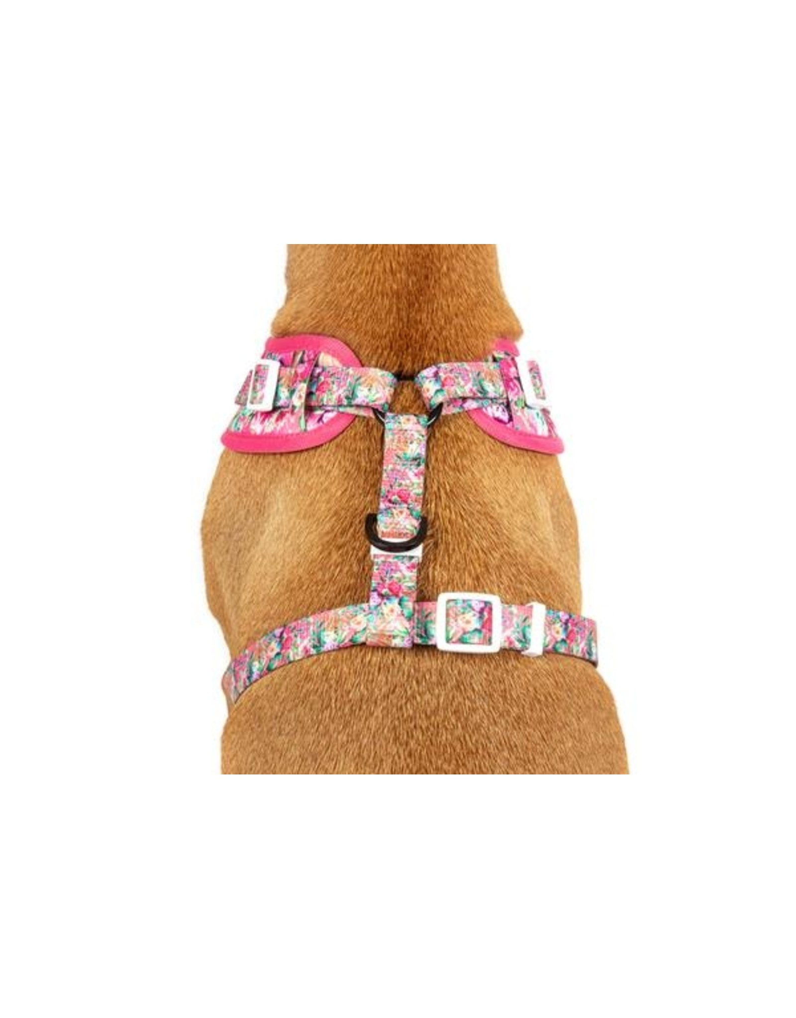 Big and Little Dogs Big and Little Dogs Adjustable Born to be a Unicorn