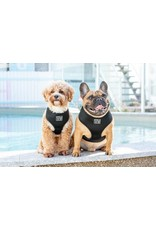 Big and Little Dogs Big and Little Dogs Classic Black