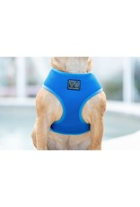 Big and Little Dogs Big and Little Dogs Classic Cobalt Blue