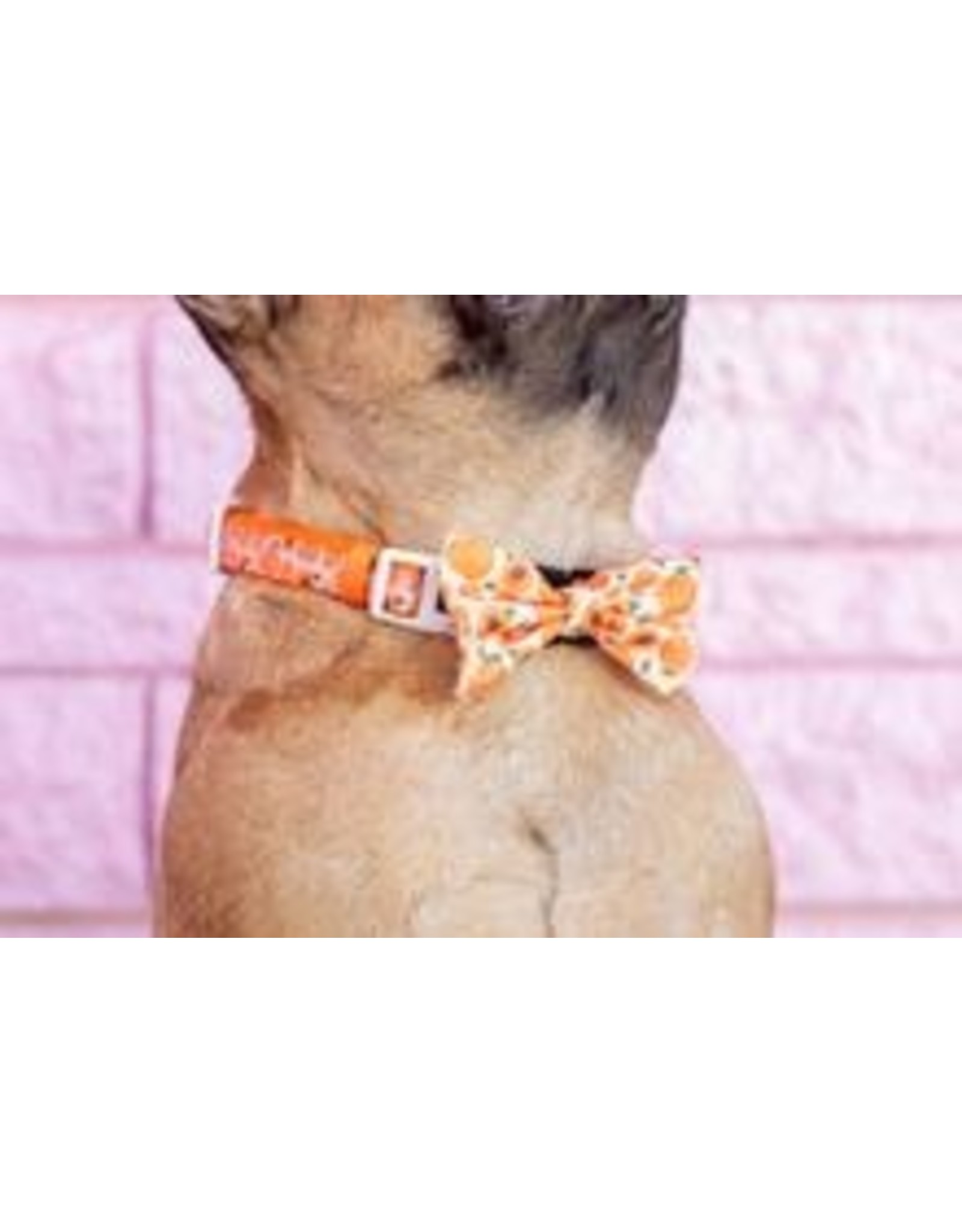 Big and Little Dogs Big and Little Dogs Halsband Just Peachy