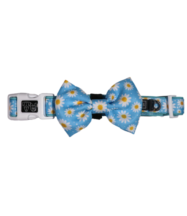 Big and Little Dogs Big and Little Dogs Collar & Bow-tie Lazy Daisy