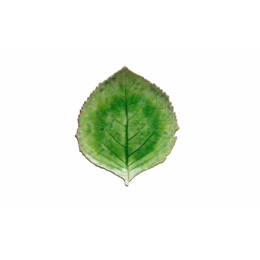 Leaf large Riviera tomate