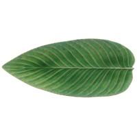 Groot blad 40cm riviera lichtgroen