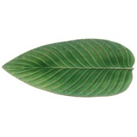 Large leaf 40 cm riviera light green