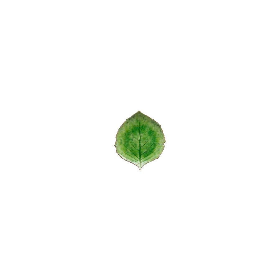 Hydrangea leaf 17cm tomate