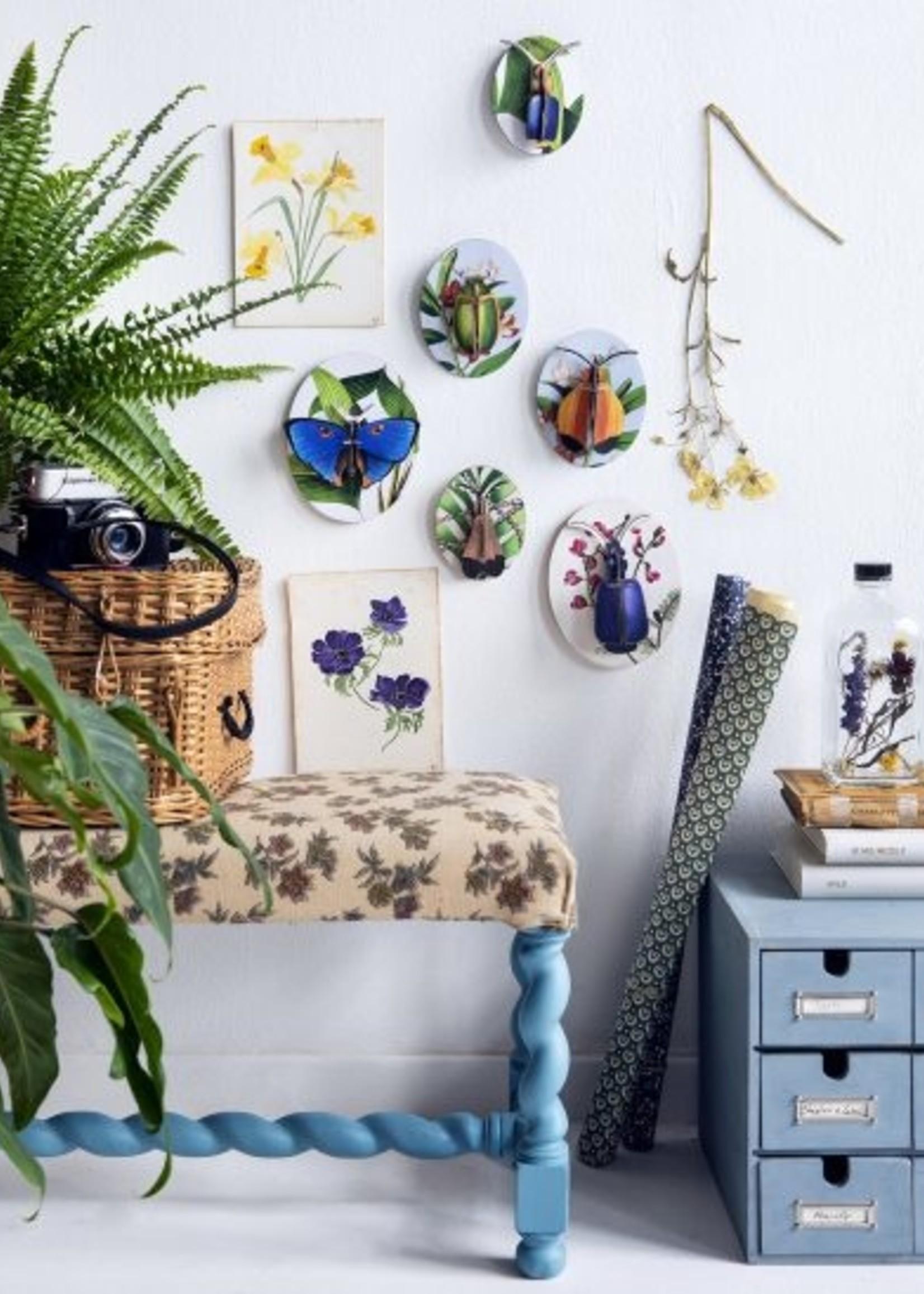 3D muurdecoratie - Collectors box Insects