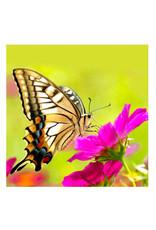 Toi-Toys - Diamond Painting 5D - Vlinder op eem bloem - 30x30 cm