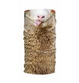 HAD  Sheep