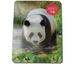 3D magnet Xing Ya