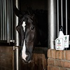 Het wassen van je paard