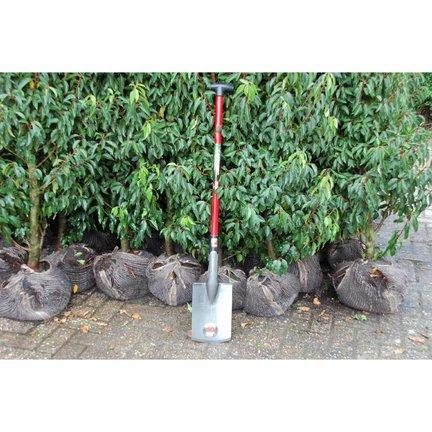 Boomspaden - Gardening Professional