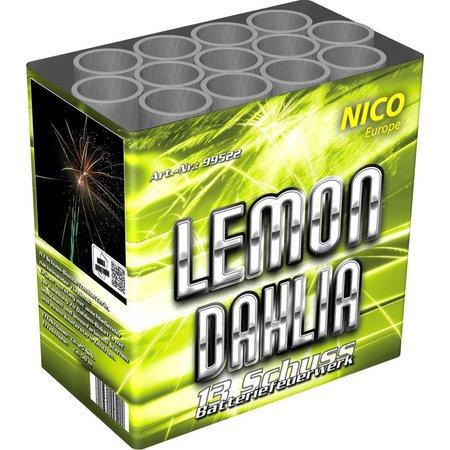 Nico Europe Lemon Dahlia