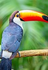 Bootkoffie Panama Hartmann Birdsong