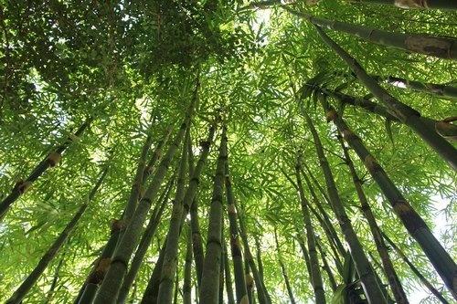 Bamboe kleding