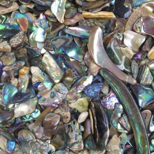Abalone stukjes 50 gram