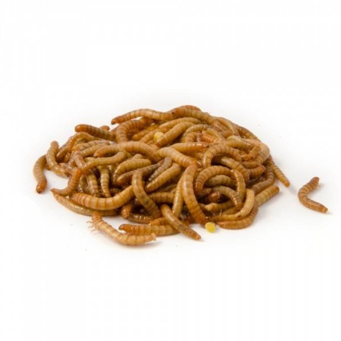 Buffalowormen 50 gr