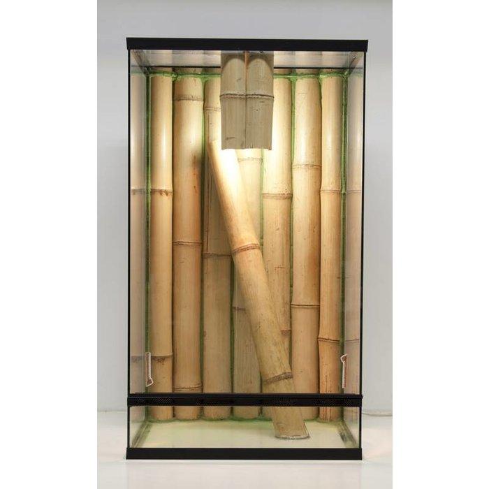 3D Bamboe Lux Phelsuma 40x40x70 cm