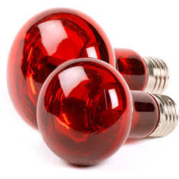 Infrarood Lamp 75W - (LI075)